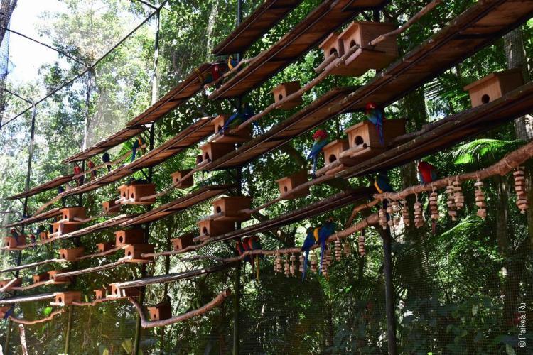 парк птиц фос-ду-игуасу бразилия / parque das aves 22