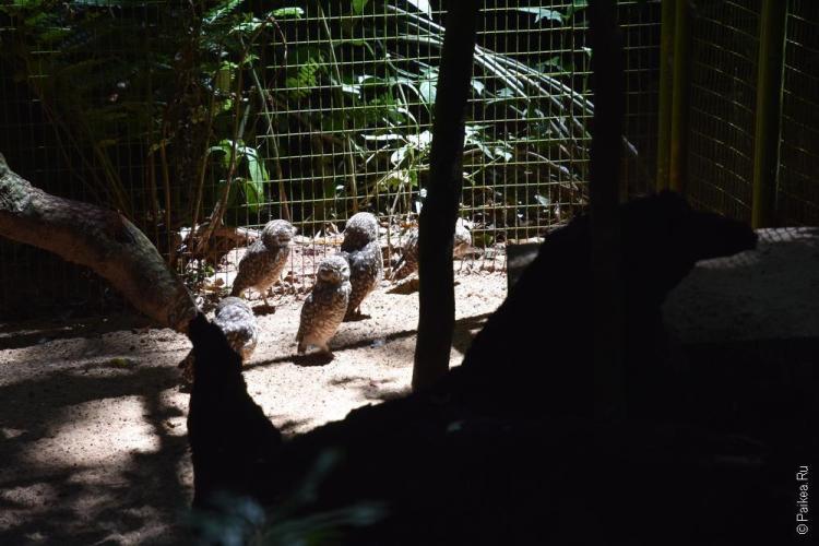 парк птиц фос-ду-игуасу бразилия / parque das aves 25
