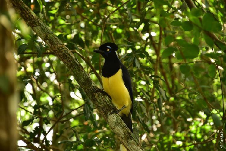 национальный парк игуасу 31