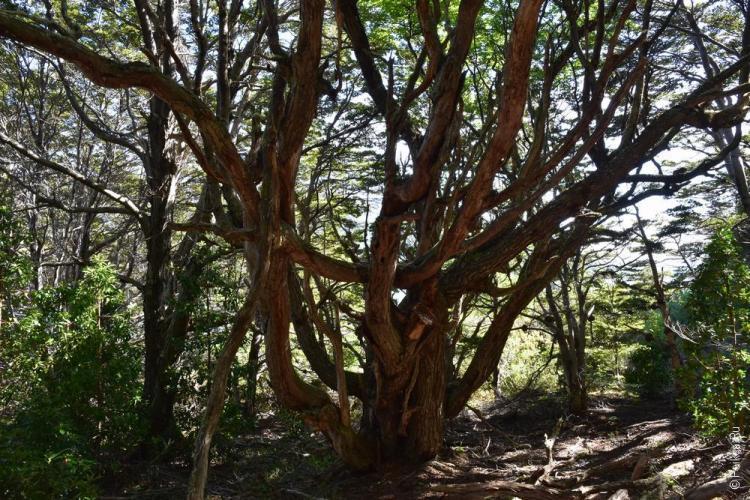 тьерра дель фуэго парк огненная земля 92