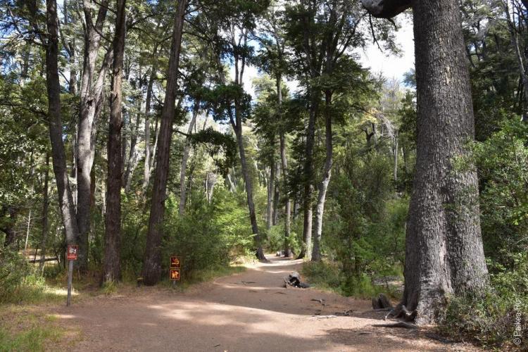 лес в парке шао шао, барилоче