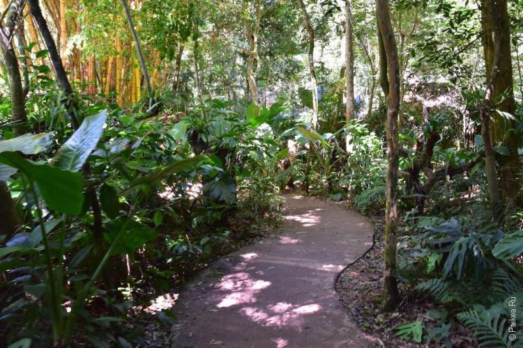 парк птиц бразилия (parque das aves) 13
