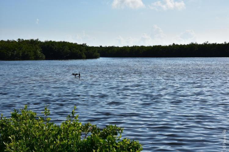 заповедник динг дарлинг на острове санибел, флорида, сша / ding darling national wildlife refuge 34