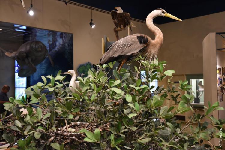 заповедник динг дарлинг на острове санибел, флорида, сша / ding darling national wildlife refuge 42
