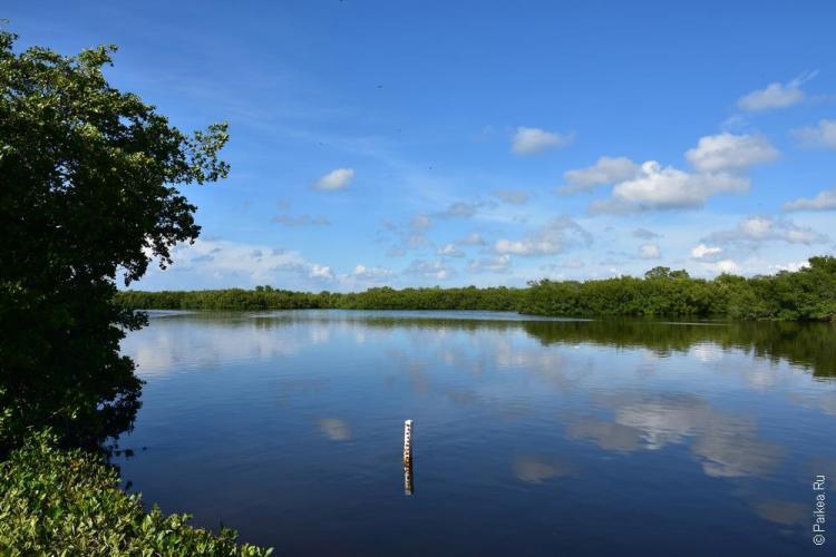 заповедник динг дарлинг на острове санибел, флорида, сша / ding darling national wildlife refuge 65
