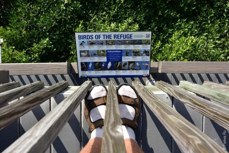 заповедник динг дарлинг на острове санибел, флорида, сша / ding darling national wildlife refuge 73