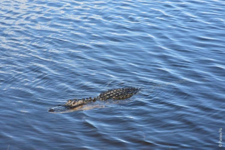 заповедник динг дарлинг на острове санибел, флорида, сша / ding darling national wildlife refuge 75