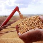 Tecnologia e boa rentabilidade da soja resultam em produção recorde de grãos em RO