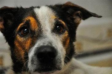 Câmara determina celeridade a projeto sobre crimes contra cães e gatos