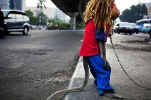 Creepy-Indonesian-street-monkeys-8