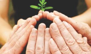 Semeando Sustentabilidade2