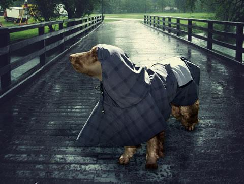 Passeando na chuva com seu pet