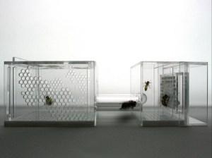 Susana-Soares-Project-Bees-9