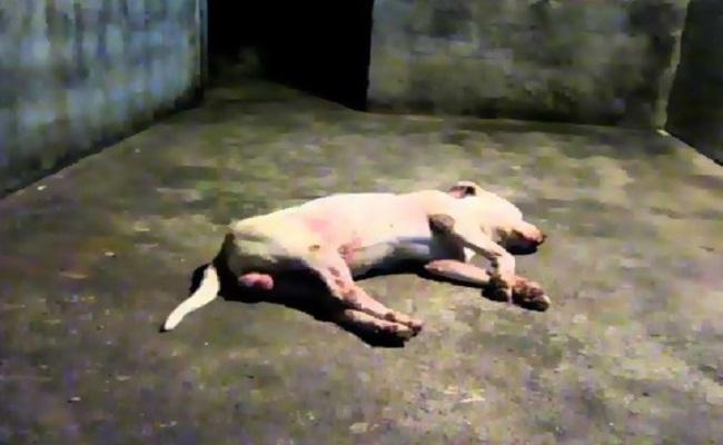 Homem mata cães na frente da família