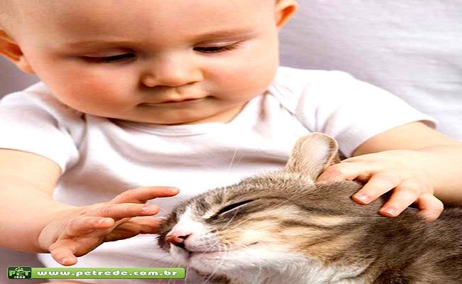 Ensine seu bicho a não ter ciúmes do bebê