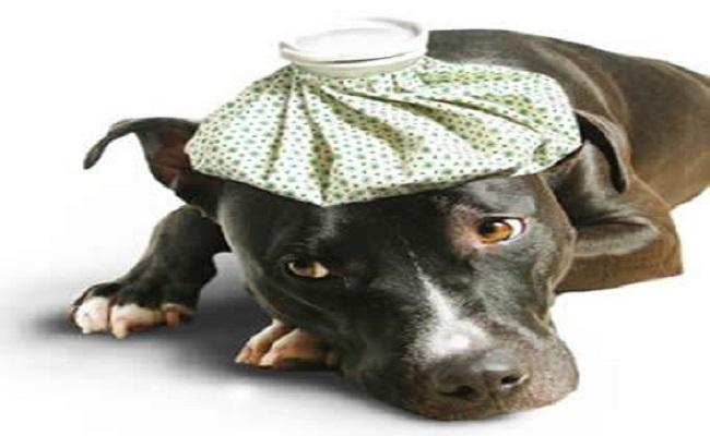 Desidratação em animais requer cuidados especiais