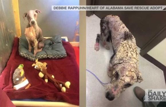Cão de rua passa por transformação após ser resgatado