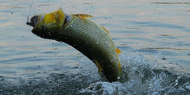 STJ aplica princípio da insignificância em caso de pesca ilegal em período de defeso