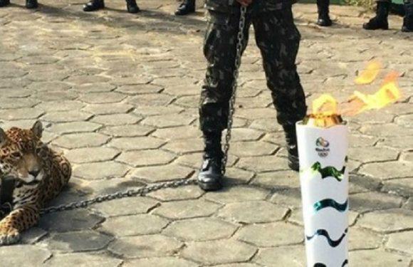 MPF pede condenação do Exército por morte da onça Juma