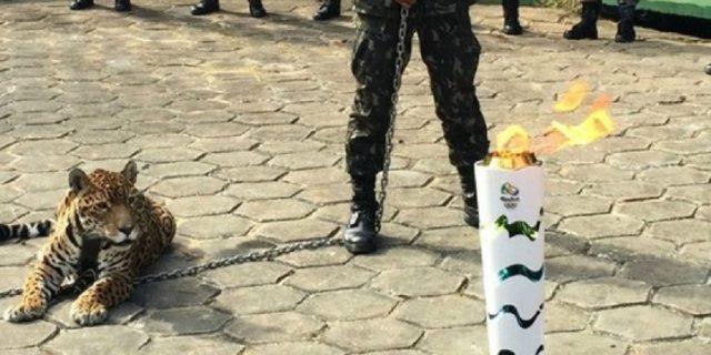 Onça foi morta logo após apresentação da Tocha Olímpica