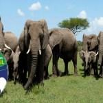 Brasil vai abrigar primeiro santuário de elefantes da América Latina; veja