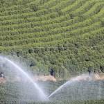 Mudanças no uso da terra afetam solo e biodiversidade