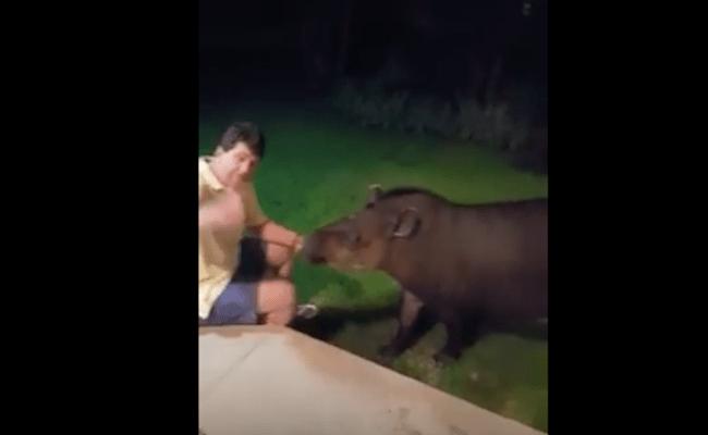 Senador de Rondônia aparece em vídeo alimentando anta e viraliza