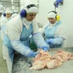"""Com 18 toneladas de peru com salmonela, fiscais avisam: """"Dá para fazer mortadela"""""""