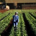 Governo aceita reduzir idade mínima para trabalhadoras rurais