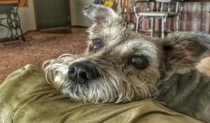 Justiça do DF condena donos de cães que mataram cachorro de estimação