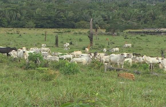 Suspensão da compra de carne por Hong Kong atinge mercado de RO