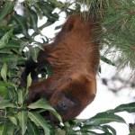 Macacos são mortos a pauladas em SP por medo da febre amarela