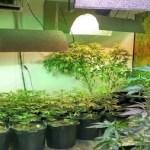 Polícia fecha laboratório de skank em casa de luxo de Florianópolis