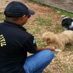 Cães de universitário que postou vídeo de zoofilia nas redes sociais são resgatados em Cuiabá