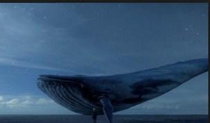 Baleia Azul: jogo mortal vira febre na Europa e acende alerta dos pais no Brasil