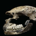 Hominídeo da África do Sul é muito mais novo do que se pensava