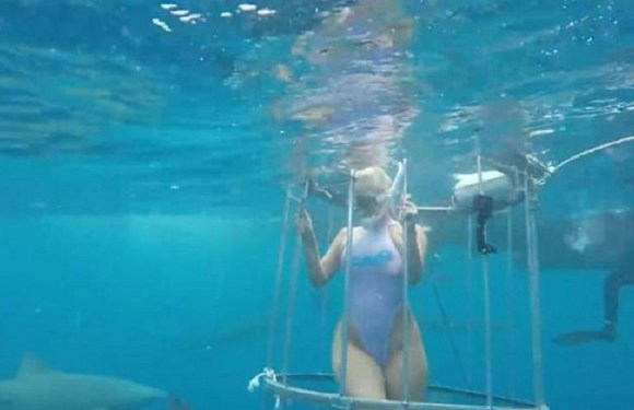 Vídeo de atriz pornô sendo atacada por tubarão é falso, diz mergulhador