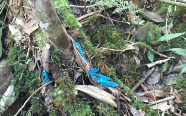 Restos mortais foram encontrados entre a Cachoeira da Fumaça e a Cachoeira do 21 (Foto: Reprodução/TV Bahia)