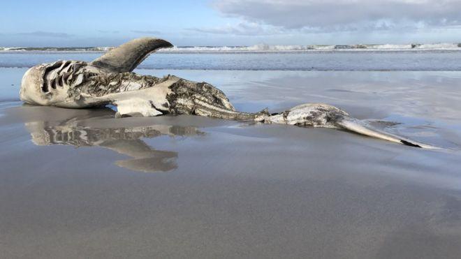 Quem está por trás da morte dos tubarões encontrados em praia sem testículos, fígado e estômago