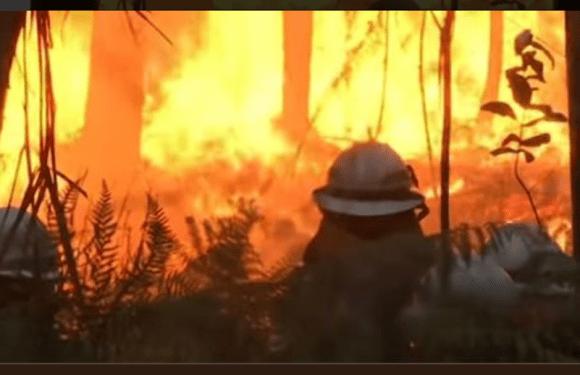 Incêndios florestais deixam cinco mortos em Portugal