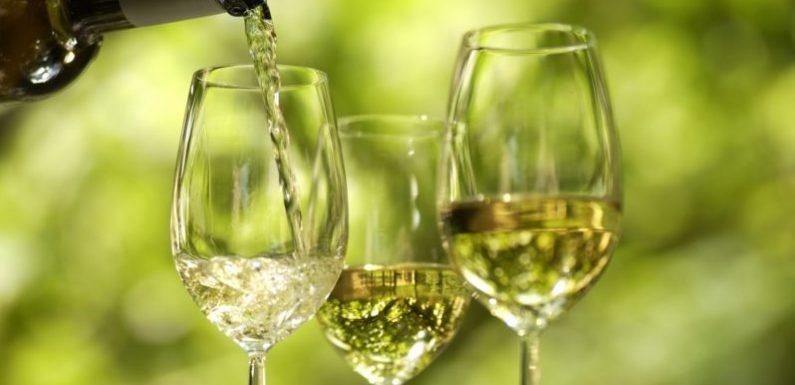 Conheça os vinhos brancos do Douro
