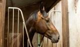 Mais de 40 cavalos são envenenados no interior de SP; 23 já morreram