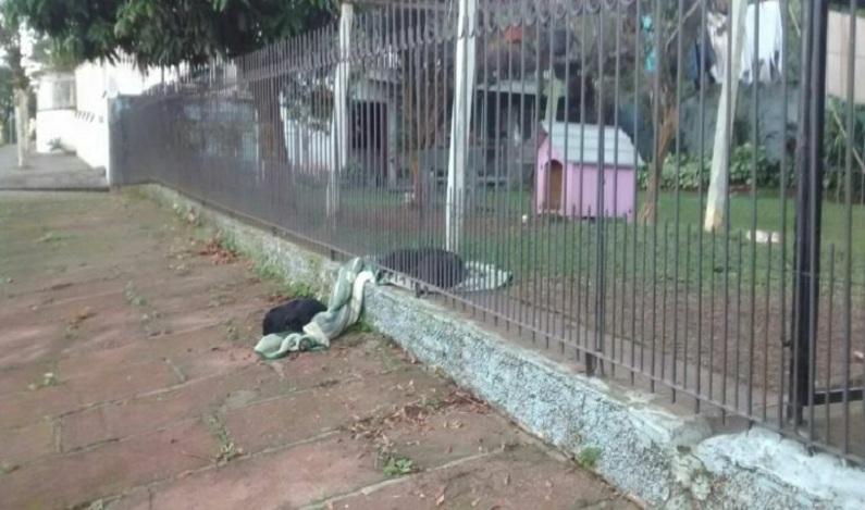 Cadela adotada compartilha cobertor com cão de rua e foto viraliza