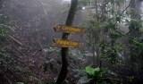 Turistas estrangeiros são assaltados e esfaqueados em trilha no RJ