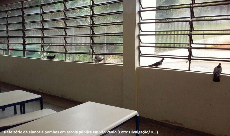 TCE encontra comida vencida e até pombos junto a merenda de escolas públicas de SP
