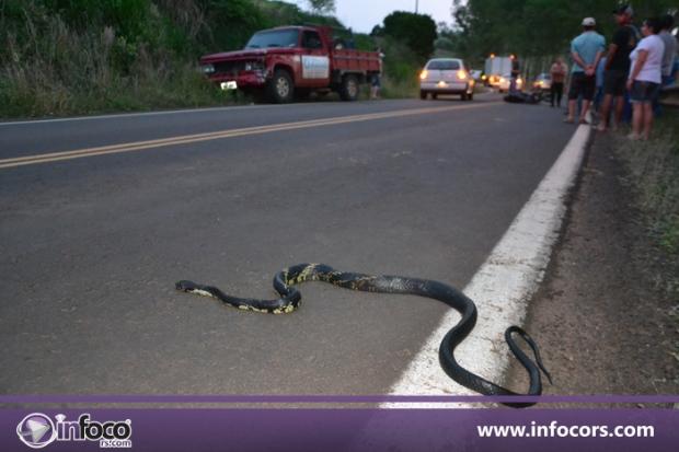 Motociclista morre após desviar de cobra e colidir com caminhonete