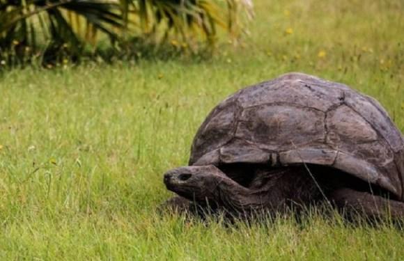 Veterinários descobrem que tartaruga mais velha do mundo é gay