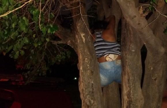 Mulher sobe em árvore para tentar invadir casa do ex, fica presa e é salva pelos bombeiros