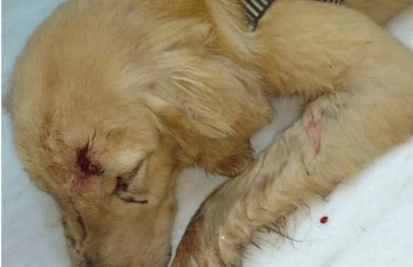 Homem agride cachorro que latia em sua porta e é preso por maus tratos