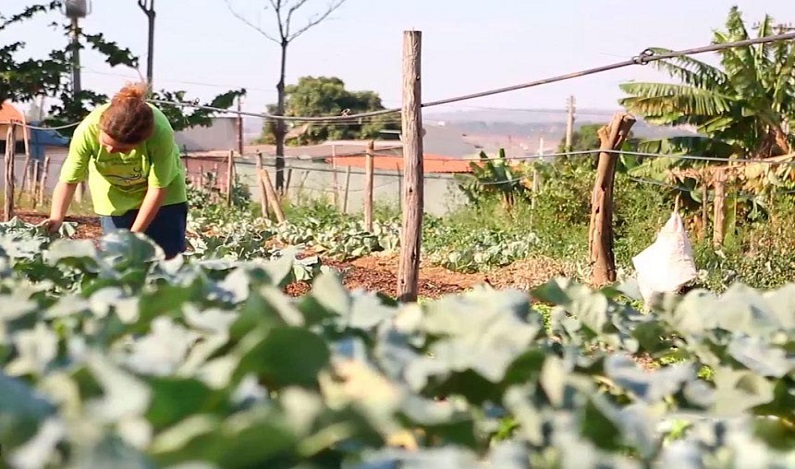 Projeto institui Política Nacional de Agricultura Urbana